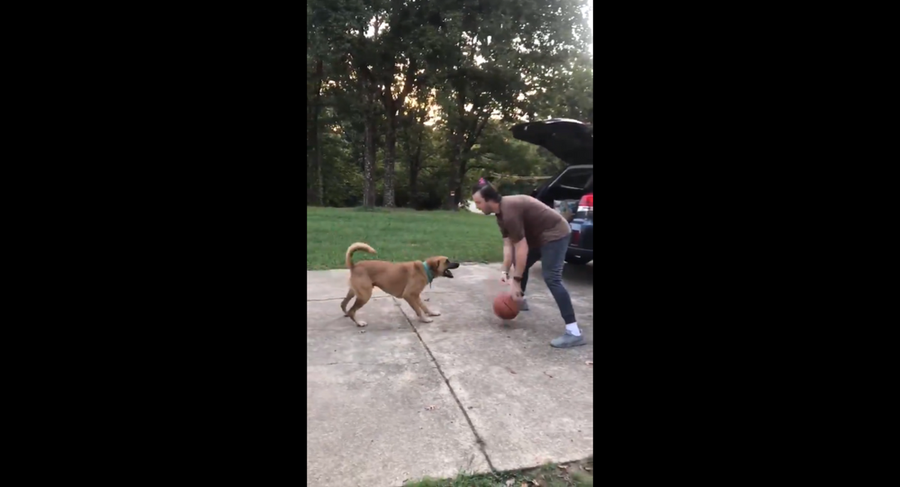 Arkansas Man Schools Dog With Basketball Game