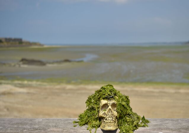 This picture taken on July 25, 2019 shows a fake skull covered with toxic seaweeds of the Vallais beach, in Saint-Brieuc, northwestern France. - Fifty years after their appearance, green algae still arouse anger and associations call for more restrictive measures.