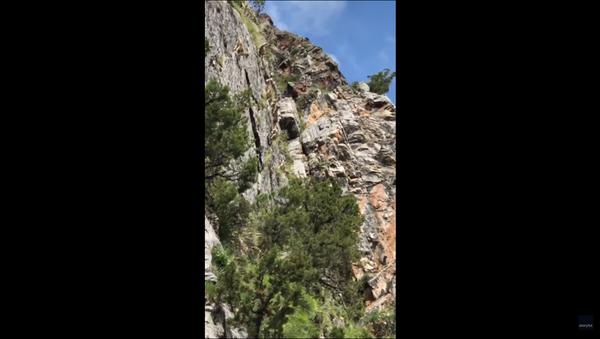 Nimble Himalayan Sheep Defy Gravity During Steep Cliff Ascent - Sputnik International