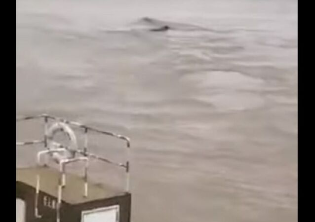 Mysterious creature in Chinese river