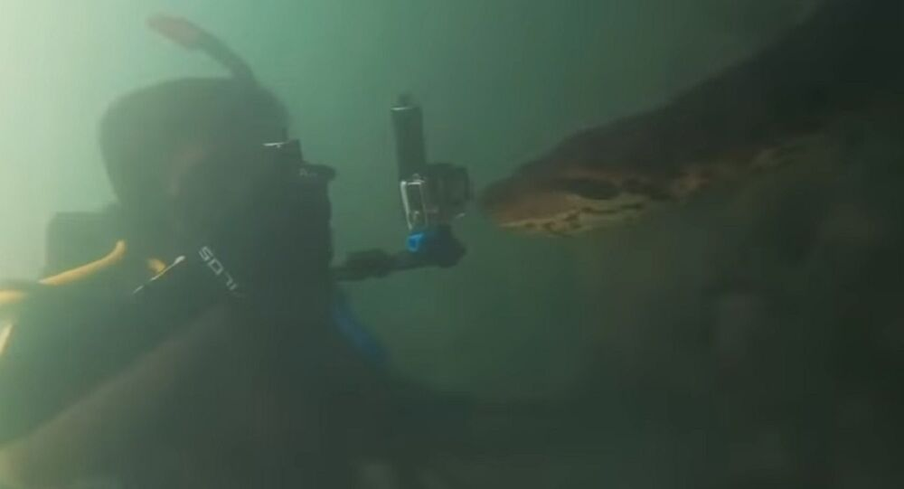Diver meets anaconda