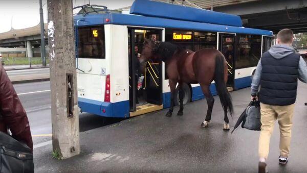 Horse thought to ride trolleybus - Sputnik International