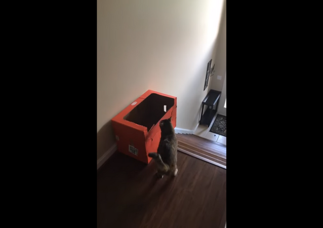Cat Finds Creative, Innovative Way to Slide Down Stairs