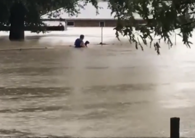 Man in Texas rescues animals from flooded house in wake of Tropical Depression Imelda