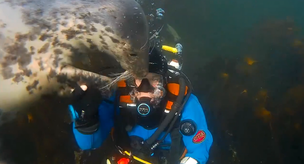 Cuddly Seal Accidentally Knocks Off Diver's Mouthpiece