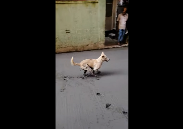 Naughty Dog Destroys Worker's Efforts, Runs Through Wet Cement