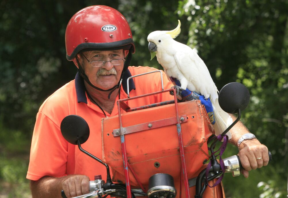 Australia postman George Johnstone pauses for a quiet moment with his two-year-old pet Cockatoo Bob as he delivers the mail in the Hunter Valley town of Aberdeen, in New South Wales, 03 January 2008.