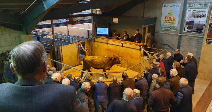An auctioneer listens to bids for a cow at a market in Enniskillen, Northern Ireland in October 2019