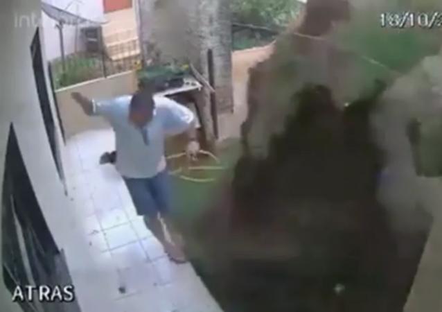 Brazilian Man Blows Up Backyard in Attempt to Kill Cockroach Nest