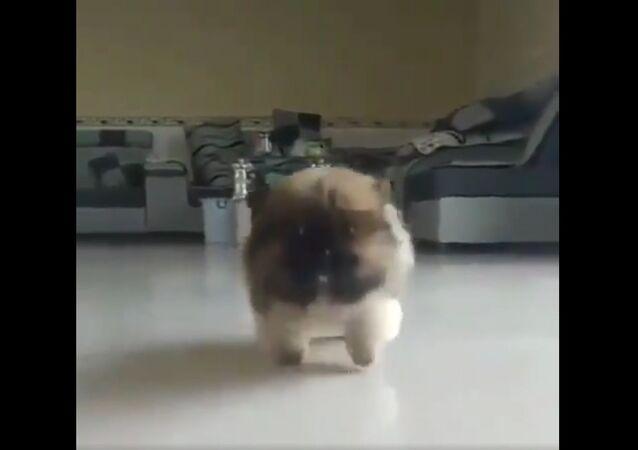 Cutes walk ever seen