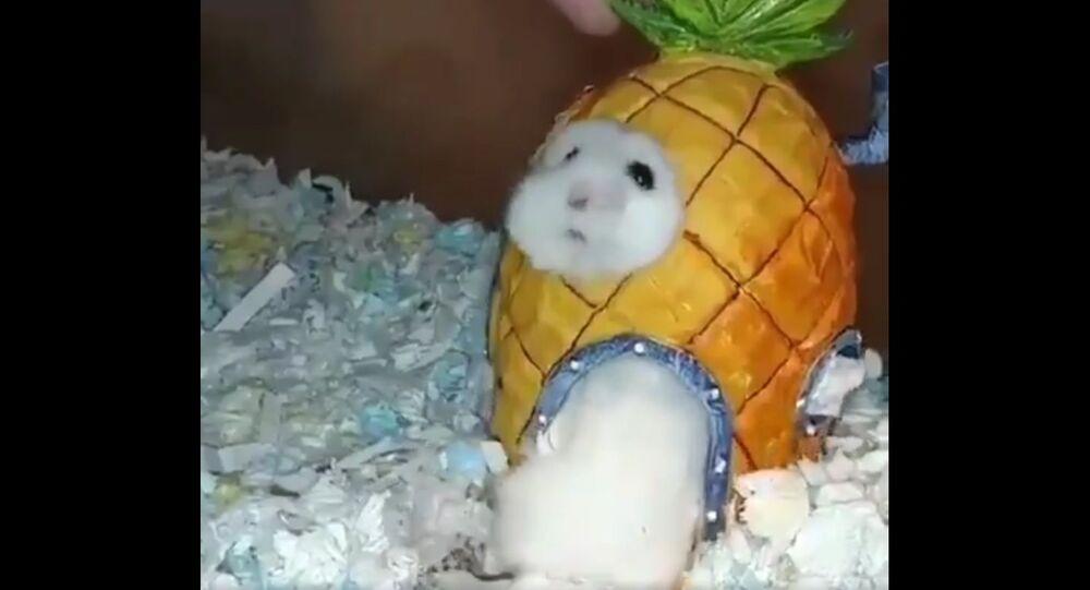 Animal Doing Jobs