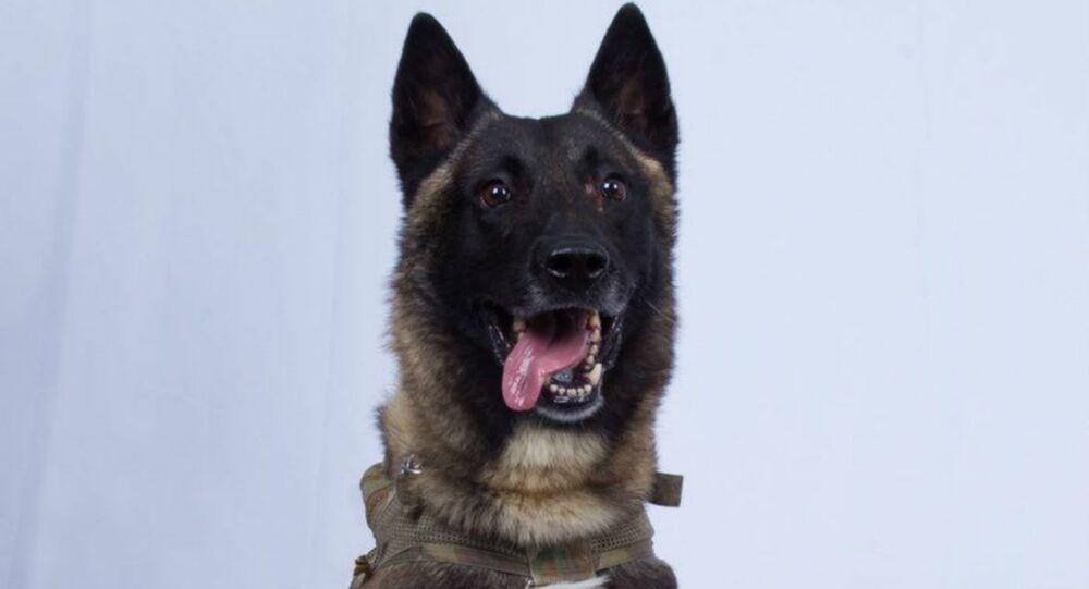 k9 dog that was presumably injured during the al-Baghdadi raid