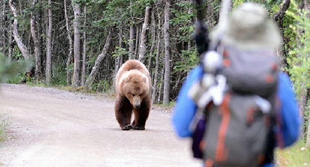 Man vs. Bear