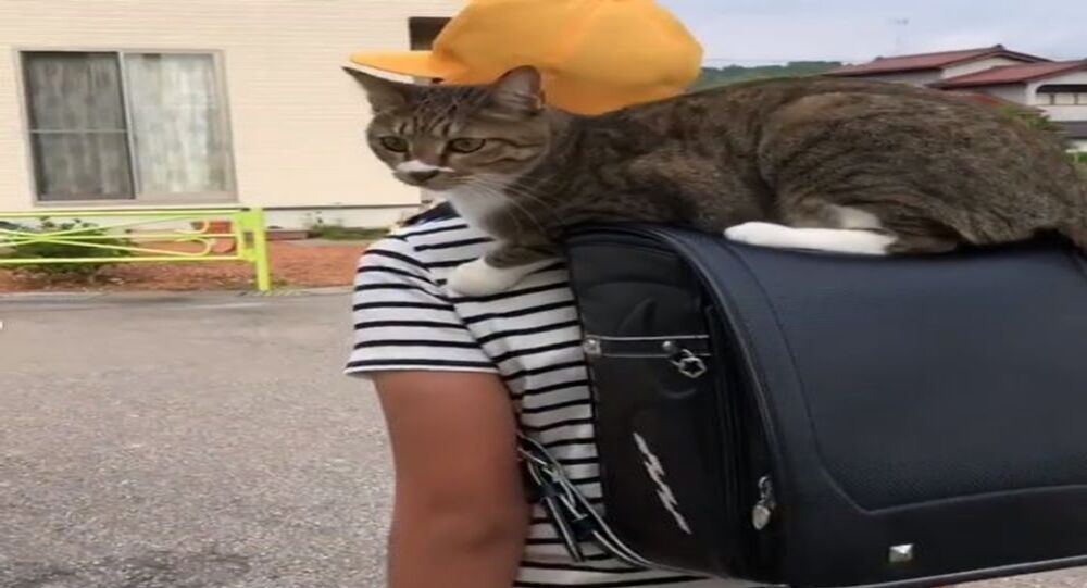 A cat that loves to ride to school on her human's backpack