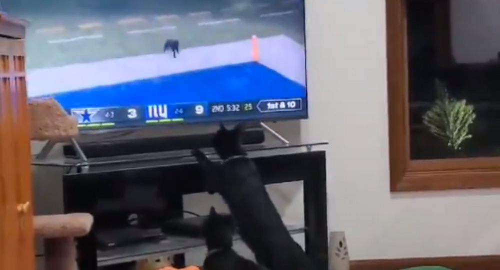 Indiana Black Cats Watch in Awe as Fellow Feline Storms Onto Football Field