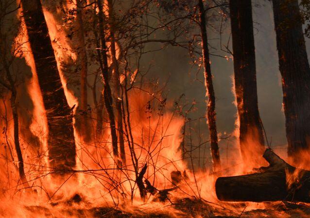 A bushfire burns outside a property near Taree, 350km north of Sydney on November 12, 2019.