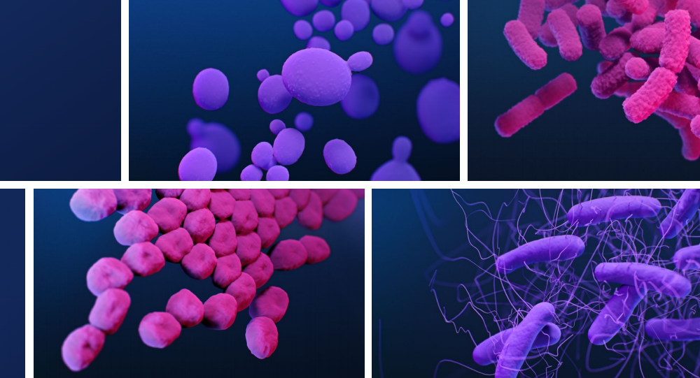 ANTIBIOTIC RESISTANCE THREATS IN THE UNITED STATES 2019