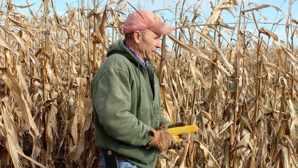 Corn and soybean farmer Don Swanson prepares to harvest his corn crop as he and other Iowa farmers struggle with the effects of weather and ongoing tariffs resulting from the trade war between the United States and China that continue to effect agricultural business in Eldon, Iowa U.S. October 4, 2019.  - Sputnik International