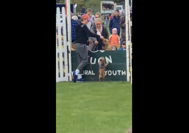 Toy Dog Wins Over Crowd Despite Failed Stint at High-Jump Contest