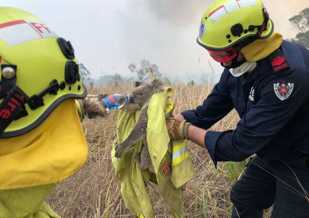 Fire and Rescue NSW team give water to a koala as they rescue it from fire in Jacky Bulbin Flat, New South Wales, Australia November 21, 2019