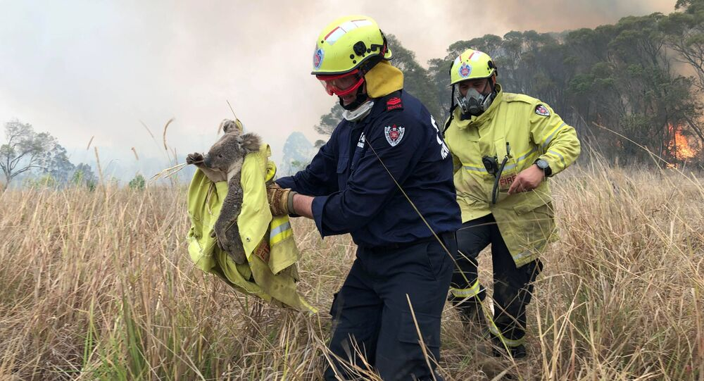 Fire and Rescue NSW team rescue a Koala from fire in Jacky Bulbin Flat, New South Wales, Australia November 21, 2019