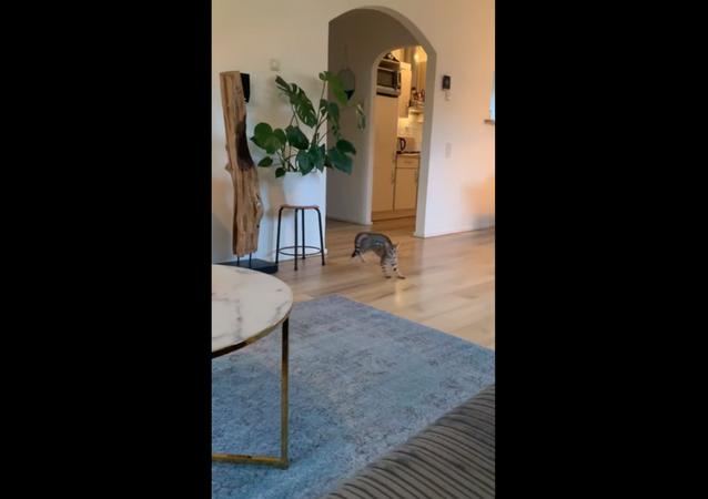 Dutch Kitty Slips, Slides on Recently Mopped Floor