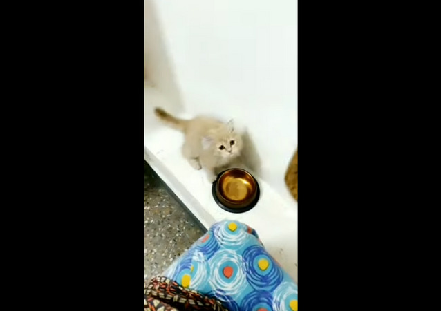 Coming in Hot: Hungry Kitty Zooms in for Food