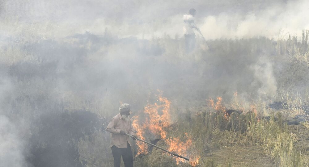 In this photo taken on November 6, 2019, farmers burn straw stubble after harvesting paddy crops in a field at a village near Sultanpur Lodhi.