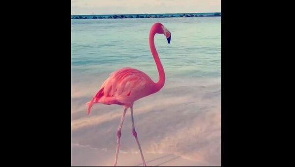Flamingo - Sputnik International