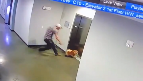 Heroic Man Saves Pup Whose Leash Gets Caught on Elevator - Sputnik International