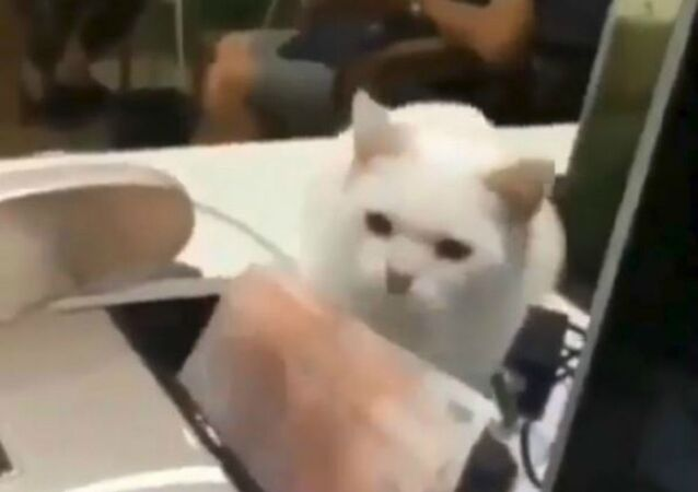 Covetous Cat Grabs Cut of Cash