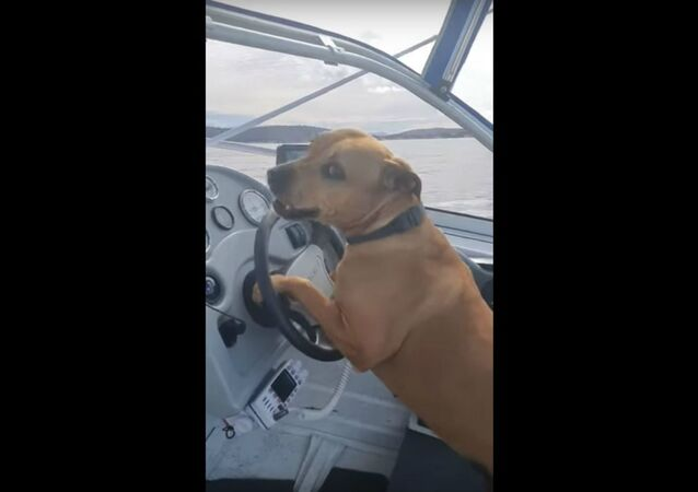Cool Canine Cruises Off Australian Coast