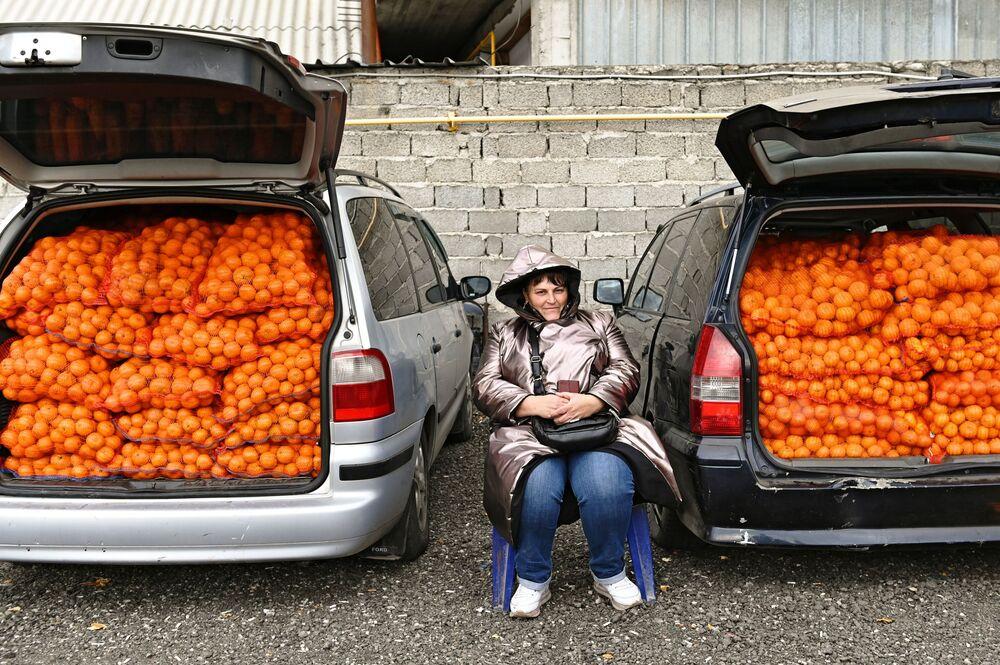 Trade in tangerines from Abkhazia near the border on Urozhaynaya Street in Sochi, Russia.