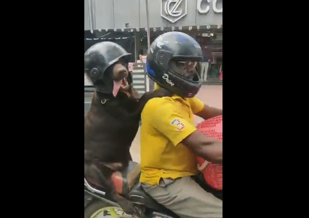 Bike-Riding Doggo Sports Black Helmet, Promoting Road Safety
