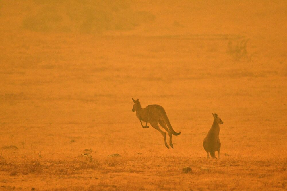 A kangaroo jumps in a field amidst smoke from a bushfire in Snowy Valley on the outskirts of Cooma on 4 January 2020. Up to 3,000 military reservists were called up to tackle Australia's relentless bushfire crisis on 4 January as tens of thousands of residents fled their homes amid catastrophic conditions.