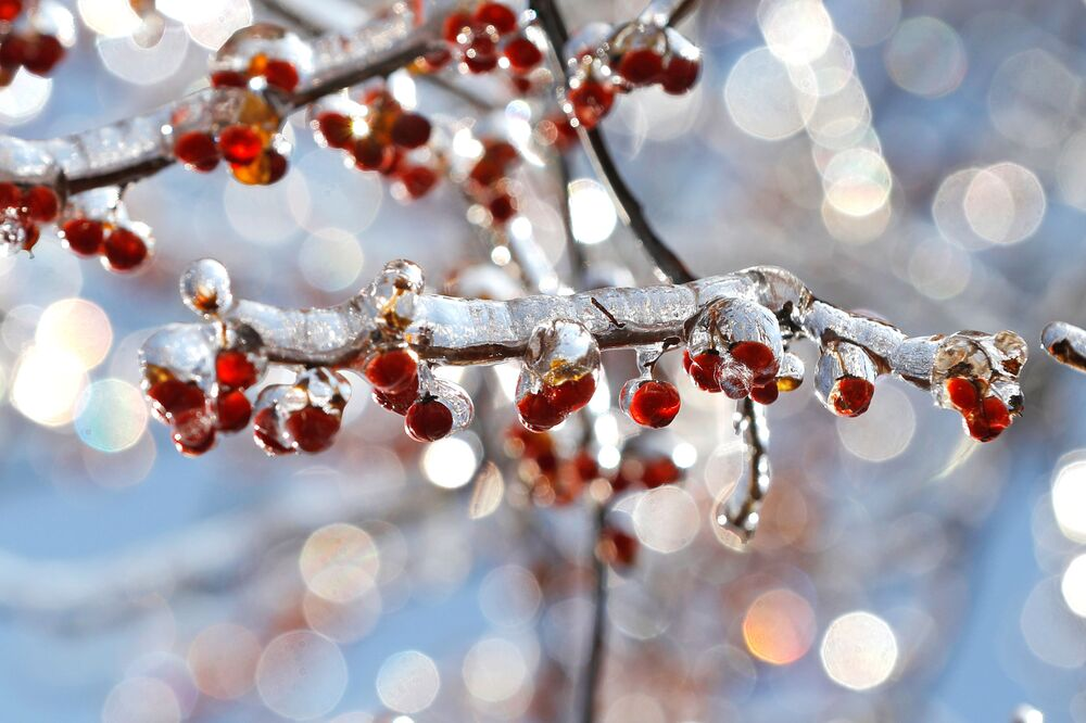 Holly berries are seen coated in a layer of ice after a winter storm in Nyack, New York, U.S., December 18, 2019.