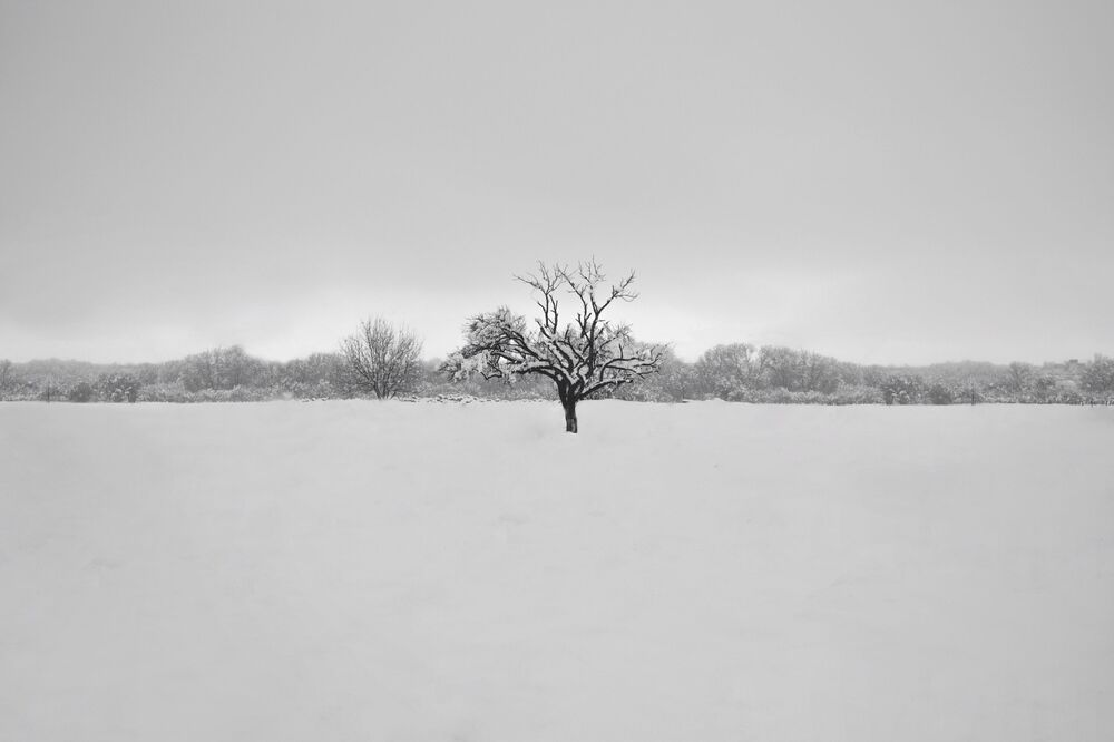 A snow-covered tree in Iran's Hamadan province