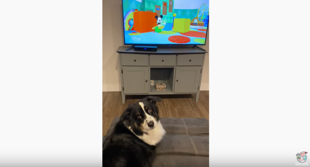 TV Time: Pooch Insists On Watching Favorite Shows