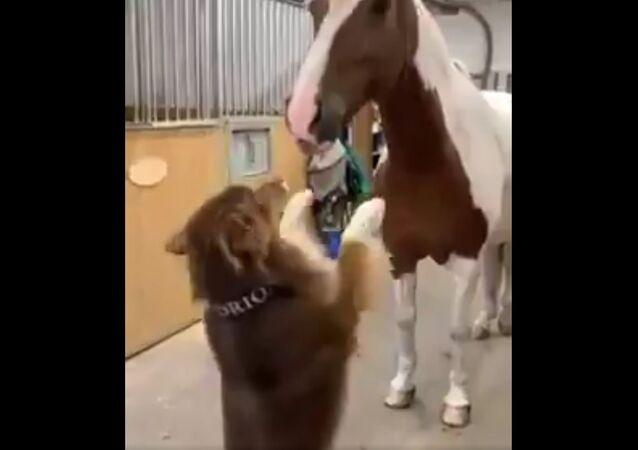 Animals  Humor