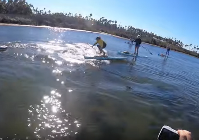 Porpoise Projectile: Dolphin Smacks Into Paddleboarder