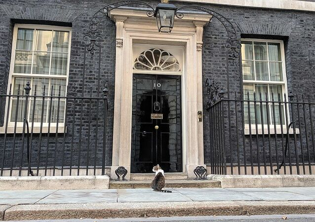 Larry the cat outside 10 Downing St.