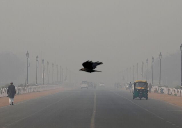 FILE PHOTO: A bird flies amidst smog near India's Presidential Palace in New Delhi, India, November 13, 2019.