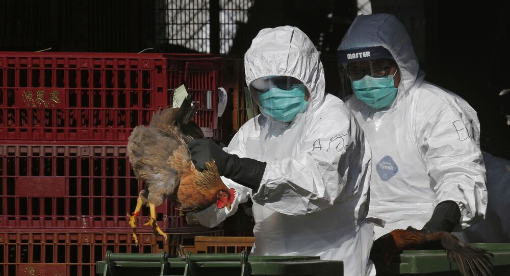 Health workers in full protective gear place a live chicken in a rubbish bin as they start culling all chickens by using carbon dioxide at a wholesale poultry market in Hong Kong