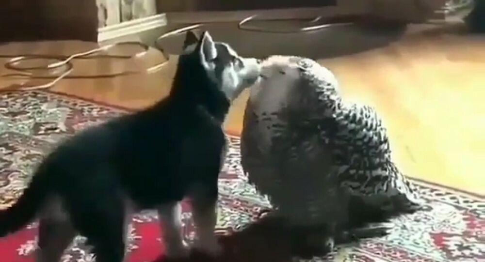 Dog Snuggles Owl