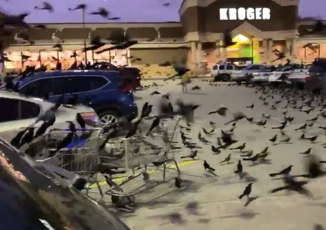 Video: Flocks of Blackbirds Invade Texas Shopping Centre Parking Lot in 'Terrifying' Moment