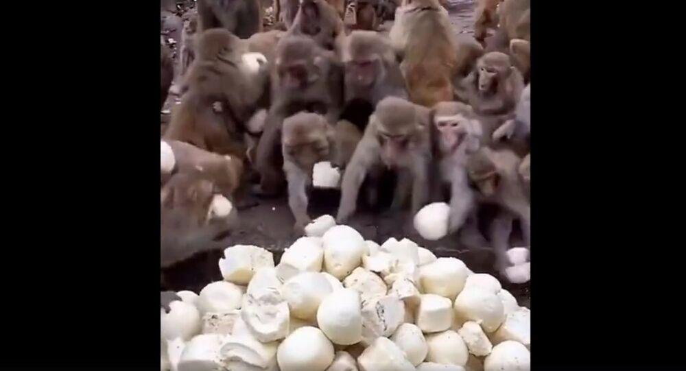 Monkeys get mantou bun