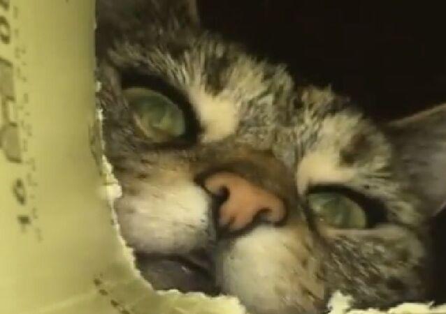 Cat and Box