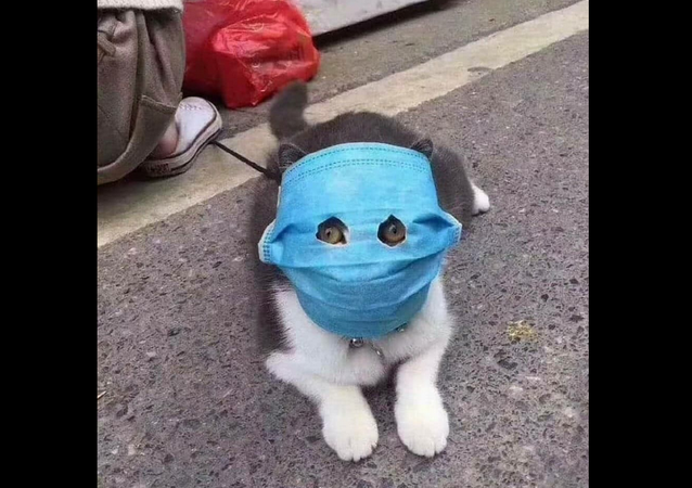 Masked cat in China