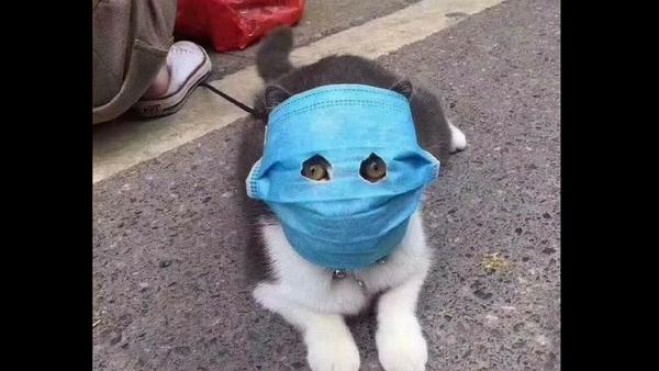 Masked cat in China - Sputnik International