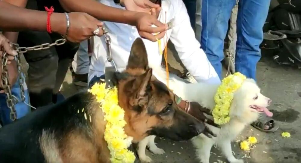 Members of Bharat Sena marrying two dogs